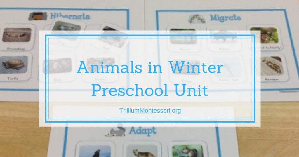 Animals in Winter Unit