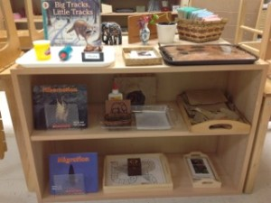 Animals in Winter- Montessori