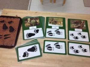 Animal Tracks- Montessori