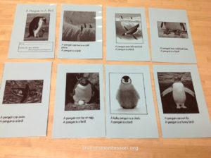 Penguins Reader