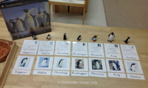 Identification Cards- Trillium Montessori