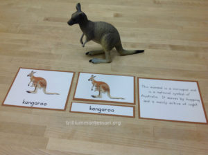 Parts of a Kangaroo - Trillium Montessori