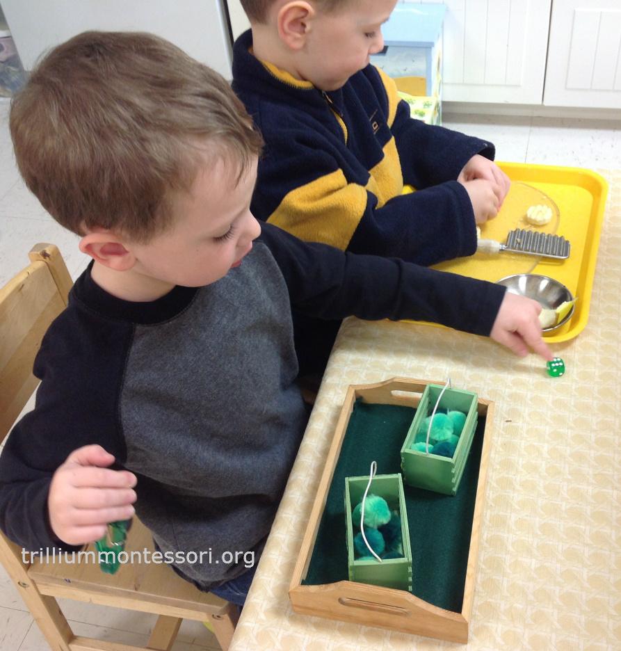 Roll and transfer pom poms- Trillium Montessori