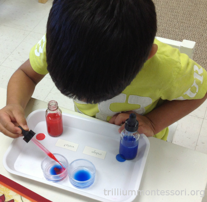 Indigo and Violet Color Mixing Trillium Montessori