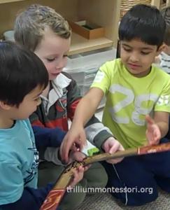 boomerang 2 Trillium Montessori