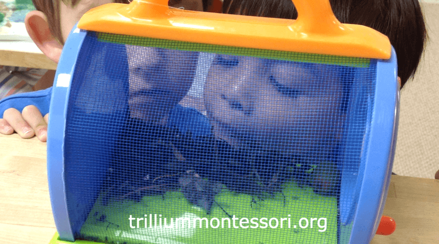 Examining bugs in a Montessori preschool