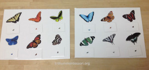 Magnify matching butterflies at Trillium Montessori