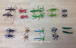 Matching Insects at Trillium Montessori