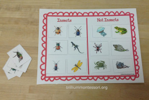 Sorting Insects/Not-insects