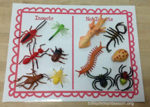 Sorting Insects/Not-Insects at Trillium Montessori