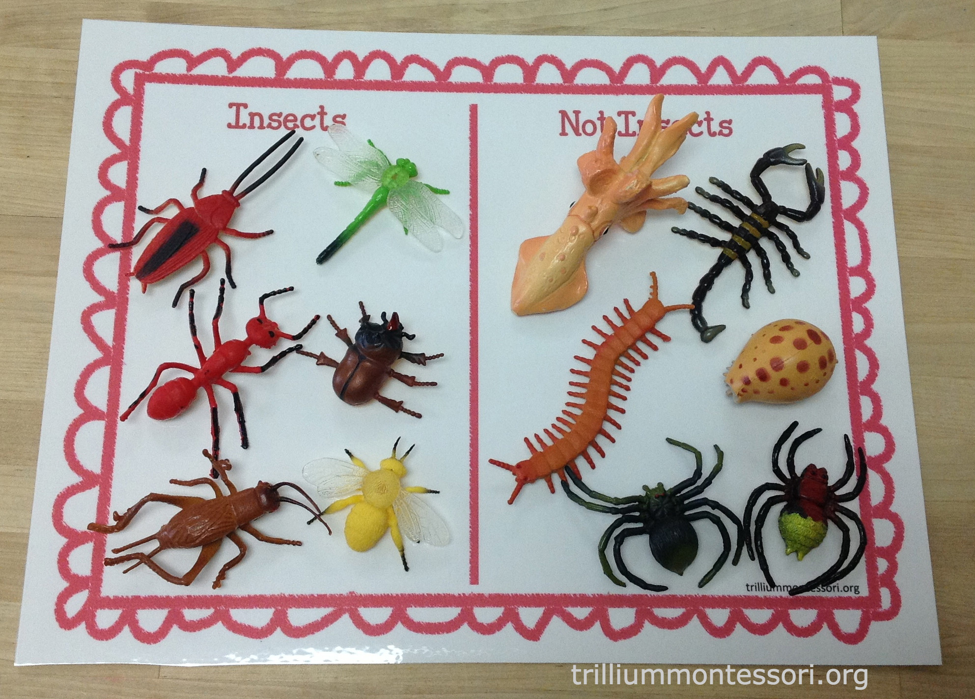 Learning About Bugs - Montessori Inspiration at Home