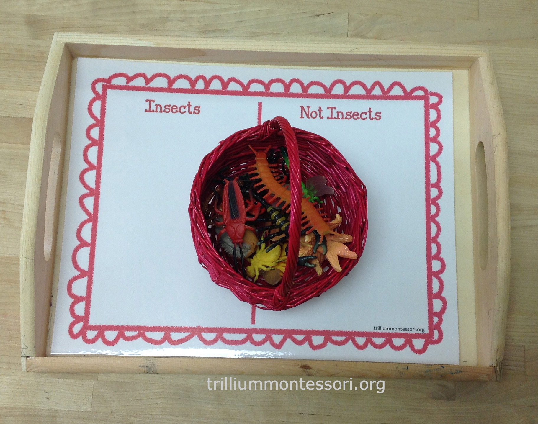 learning about bugs activities for preschool and montessori