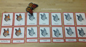 Parts of a Butterfly at Trillium Montessori