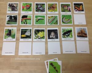 Butterflies and Caterpillars at Trillium Montessori