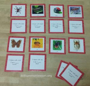 Bug Rhyming Riddles at Trillium Montessori