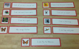 Bugs/Insects Phonetic Reading Sentences at Trillium Montessori