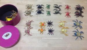 Matching Spiders at Trillium Montessori