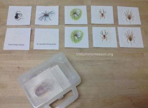 Matching and Identifying Spiders at Trillium Montessori