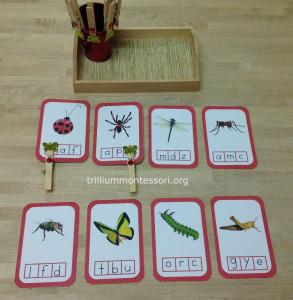 Bugs initial sound clip cards at Trillium Montessori