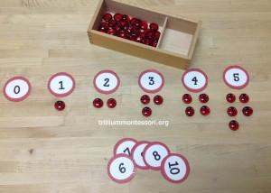 Counting Ladybugs at Trillium Montessori