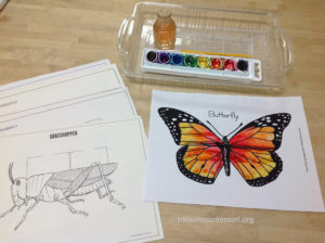Wet on Wet Watercolor Insects at Trillium Montessori