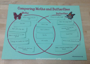 Comparing Moths and Butterflies Venn Diagram at Trillium Montessori