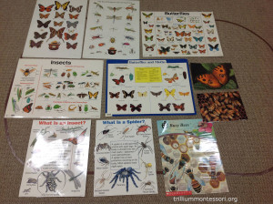 Posters about bugs at Trillium Montessori