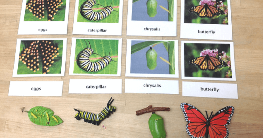 Preschool activities for Learning About Bugs