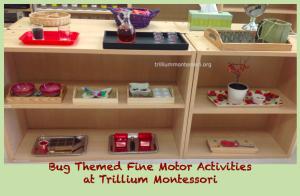 Fine Motor Shelf at Trillium Montessori- Bug theme