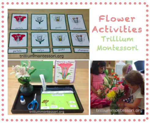 Flower Activities at Trillium Montessori