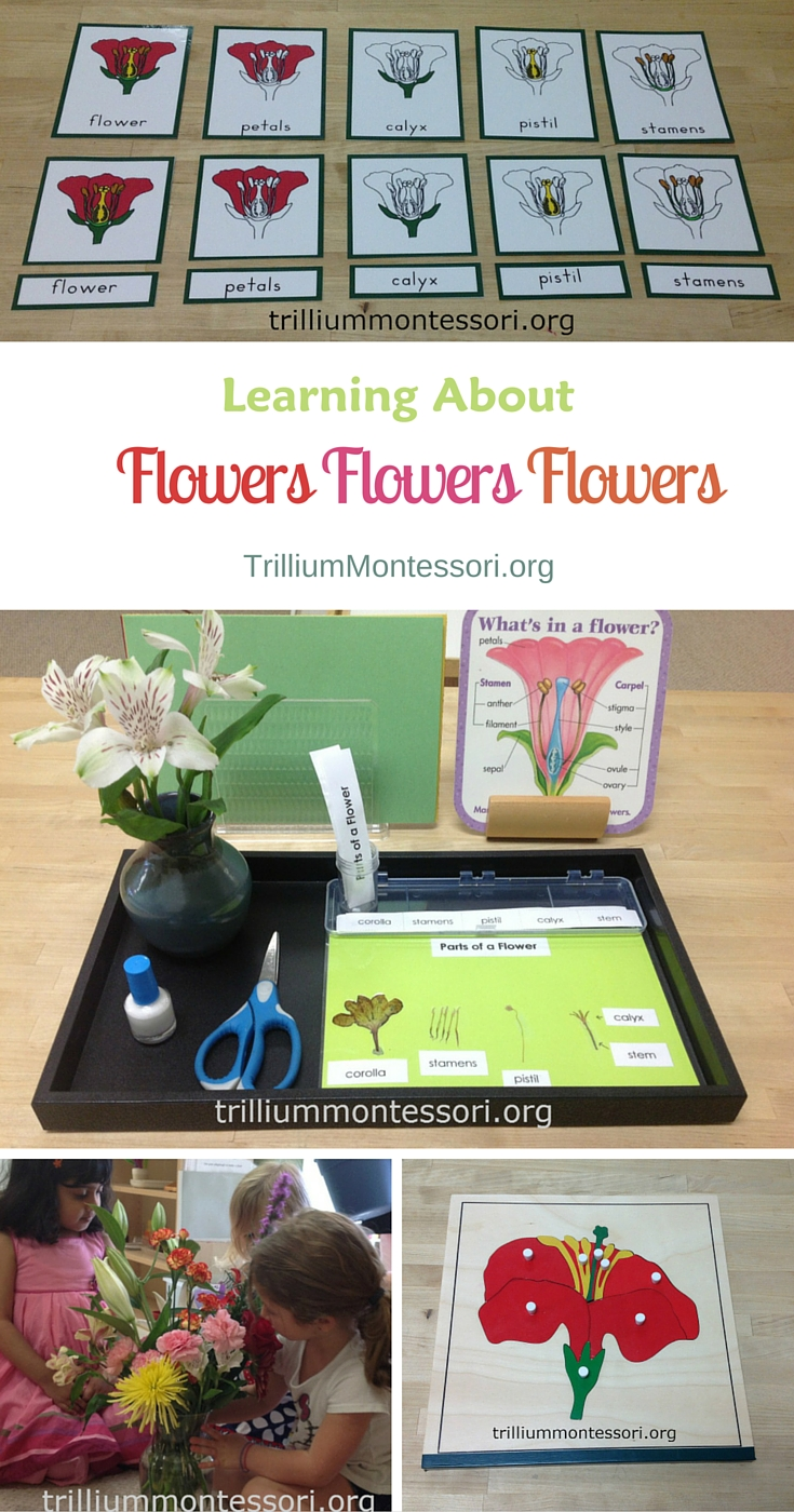 Learning about flowers