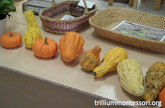 Gourds on display