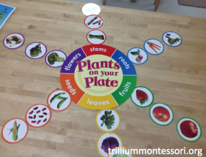 Plants on a Plate