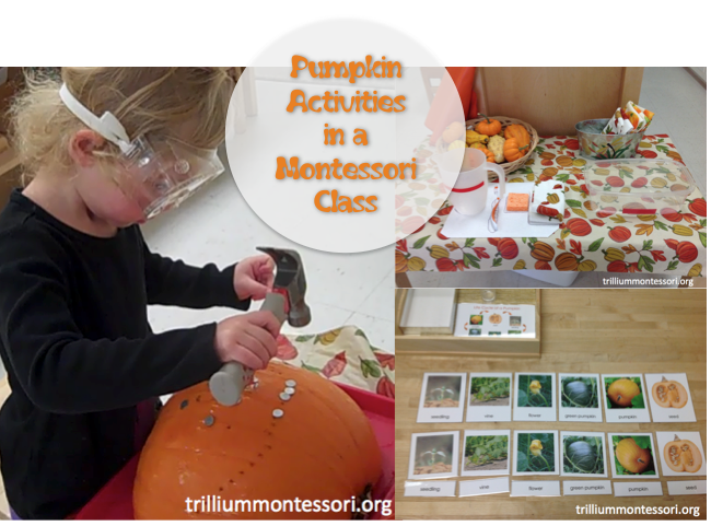 Pumpkin Activities in a Montessori Class
