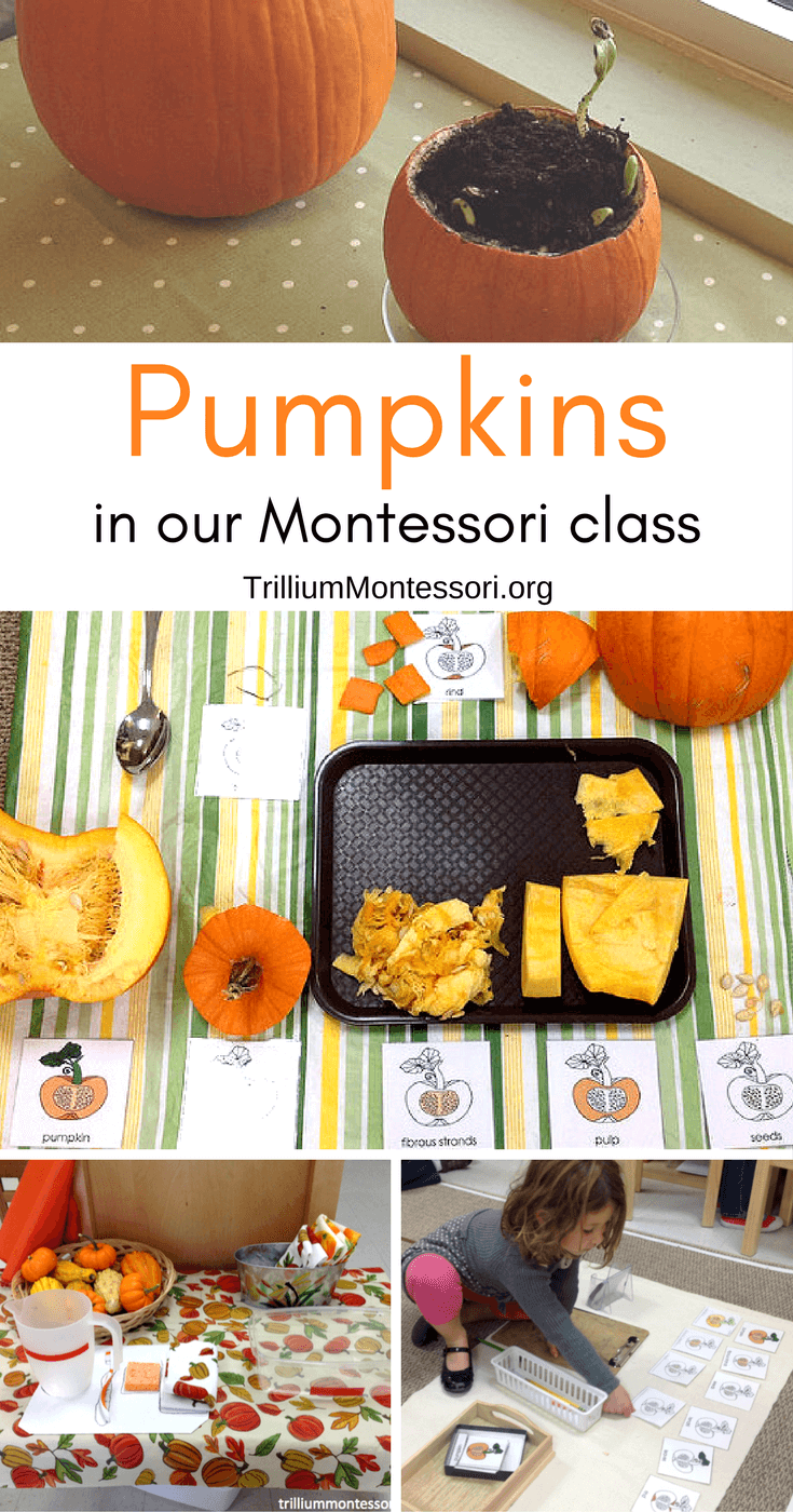 Pumpkin theme activities in our Montessori class