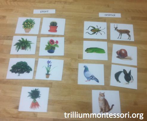 Plant and Animal Sorting
