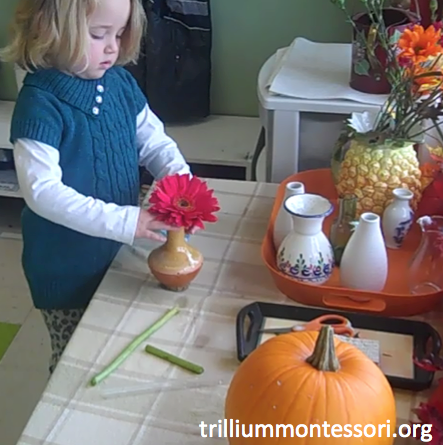 Preschool Thanksgiving Feast- Arranging Flowers