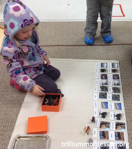 Sorting Animals from North America