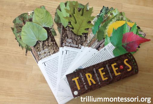 Trees fan deck