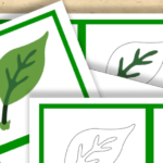 Free Montessori Printable Parts of a Leaf