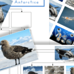 Free Printable Antarctic Food Web