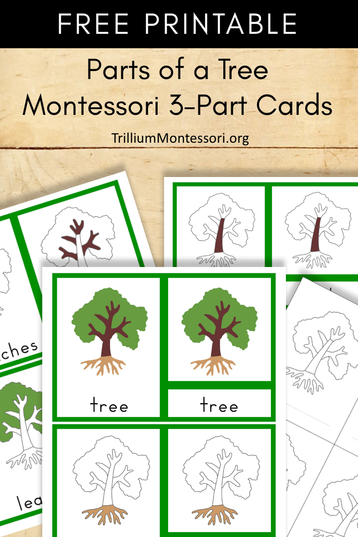 Free Printable parts of a tree Montessori 3 part cards