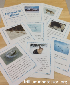 January- Animals in Winter- Non Fiction Book