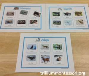 January- Animals in Winter- Sorting