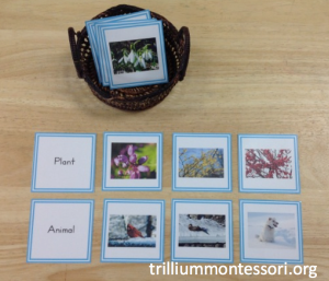 Sorting Plant and Animal Pictures