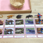 Preschool Kindergarten and Montessori South America unit