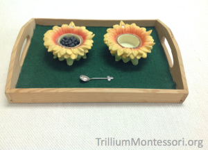 Spooning Seeds in Sunflower Dishes