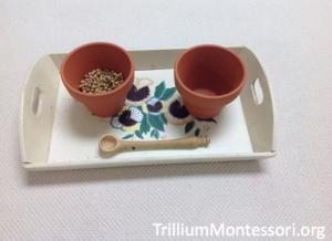 Spooning Seeds in Terracotta Pots