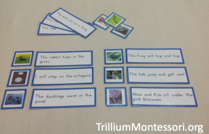 Spring Phonetic Reading Sentence and Picture Cards
