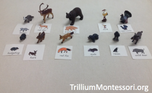 Animals from Europe Object Picture Matching